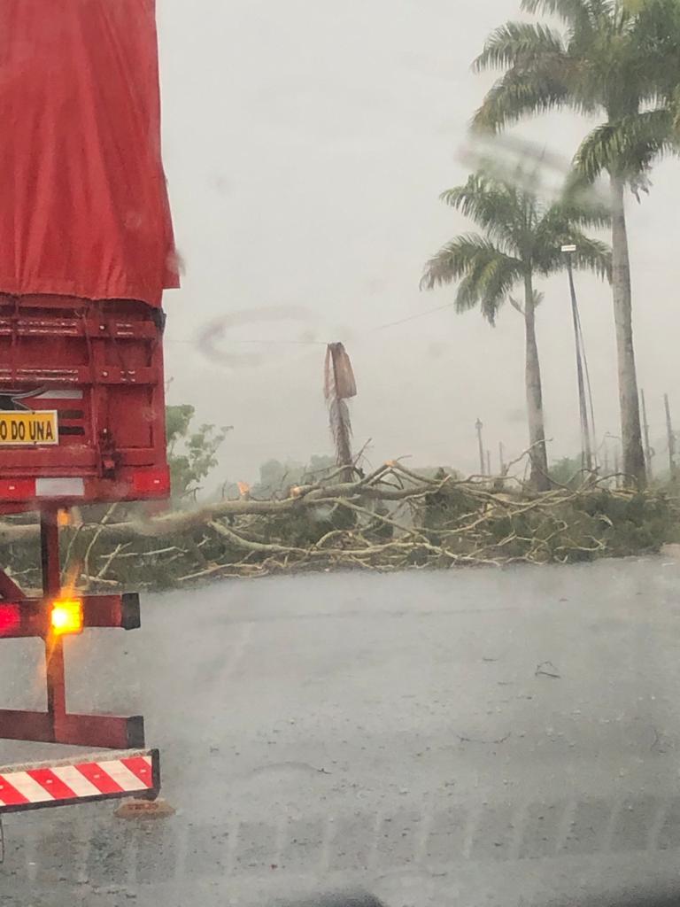 Canhotinho-PE: Chuva e ventos fortes derrubam árvores na entrada da cidade